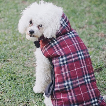 Dog Jacket Online