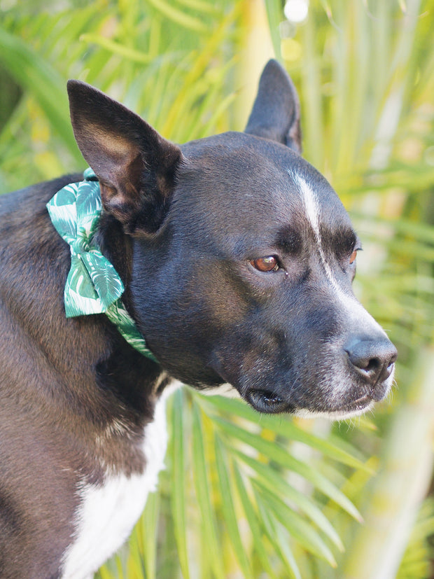 Jungle Leaf Dog Bow Tie Collar