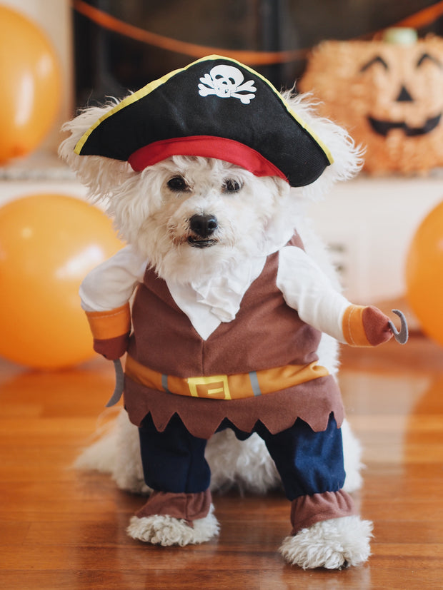 Little Capt'n Pirate Dog Costume