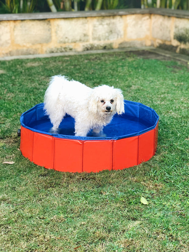 WetDog Swimming Pool