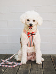 Dog Bow Tie Harness and Lead