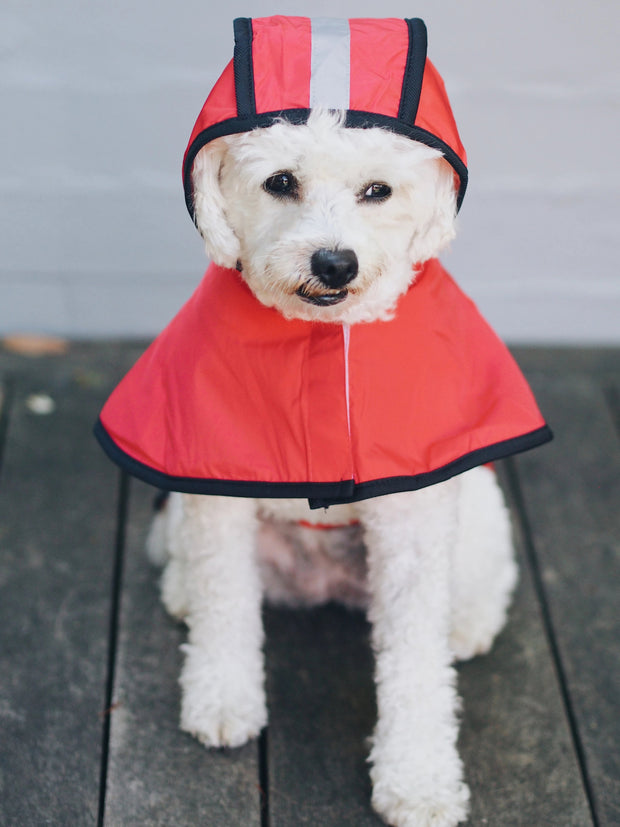 Hi-Vis Safety Dog Raincoat