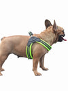 Heavy Duty Padded Nylon Harness