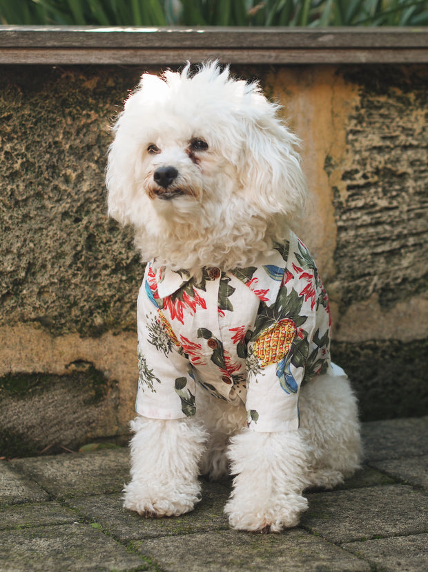 Surf's Up! Hawaiian Dog Shirt