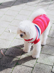 Varsity Striped Dog Sweater