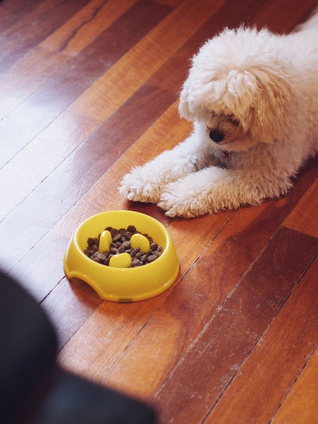 Interactive Nub Slow-Eater Dog Bowl