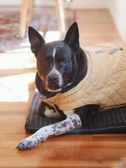 Cosy Quilted Dog Coat