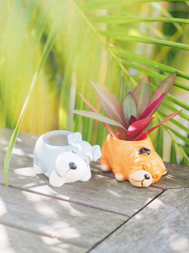 Sleepy Dog Succulent Planter