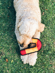 Plush Boomerang Dog Toy