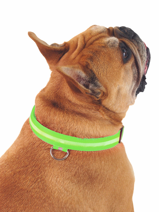 LED dog collar for night walks and safety