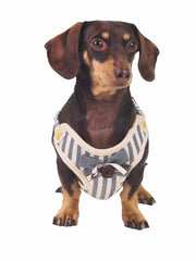 Affordable online dog muzzles and harnesses