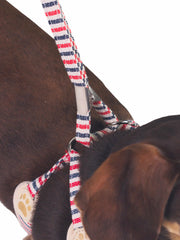 Small dog bow tie harness and lead