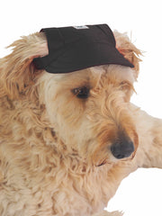 Affordable online dog headwear and hats