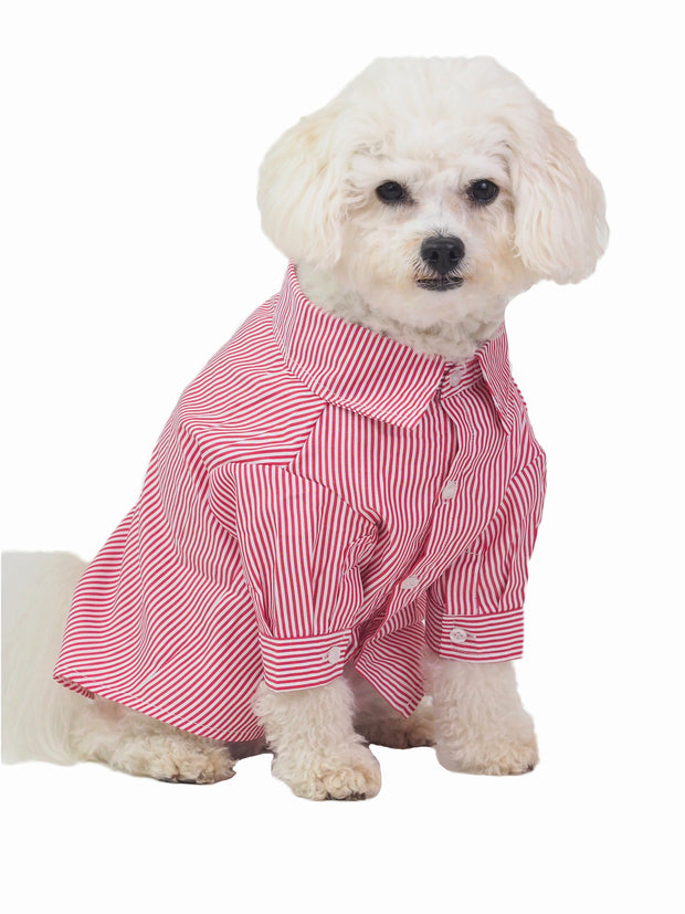 Affordable online dog apparel and business shirts