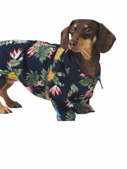 Best online apparel for dogs