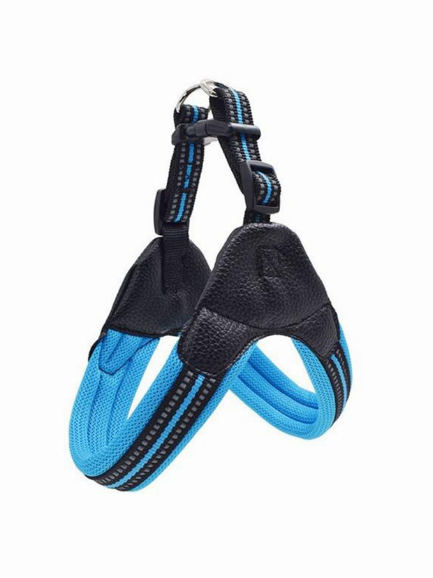 blue online nylon dog harness