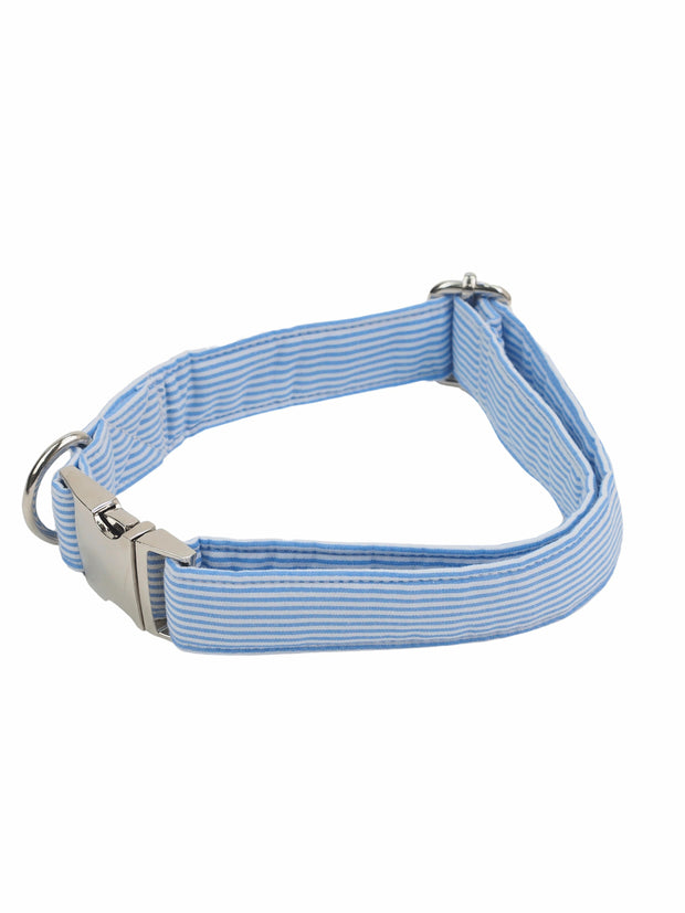 Fashionable dog collar in blue stripe