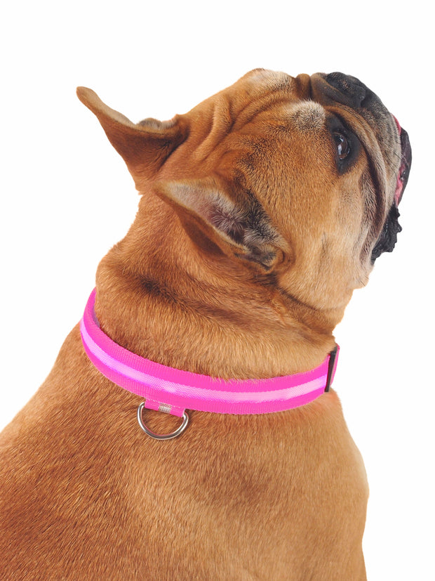 Dog collar with bright LED light