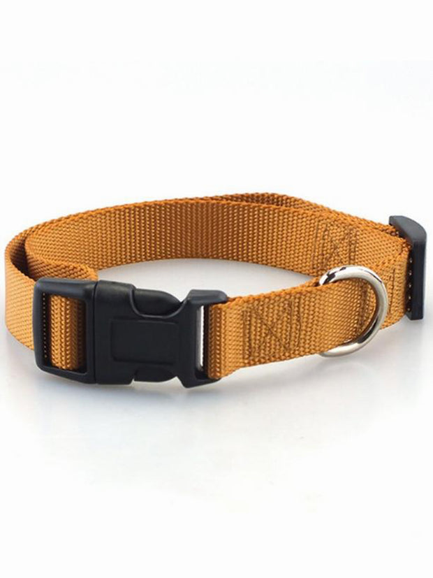 brown online dog collar