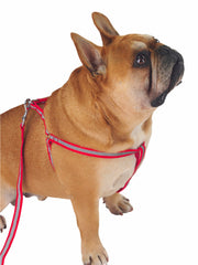 Reflective Dog Harness and Lead in red