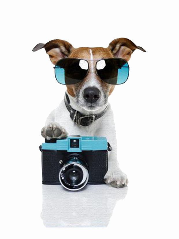 Funny dog with camera and sunglasses art print