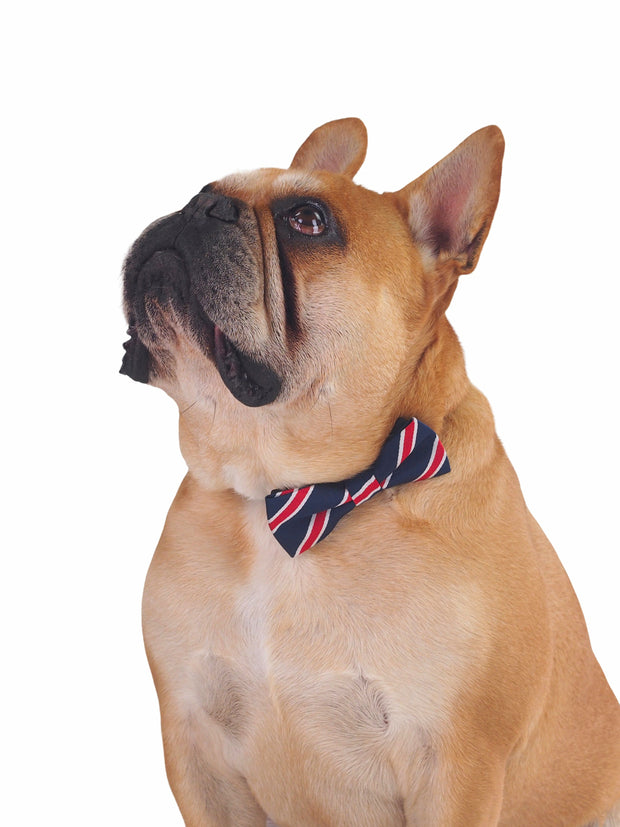 Dapper bow tie for dogs