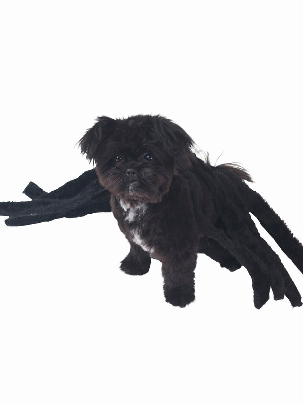 Affordable online halloween spider dog costume