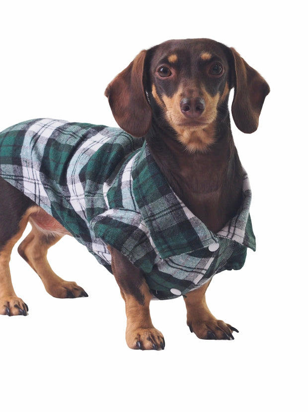 Affordable online dog apparel and plaid shirts