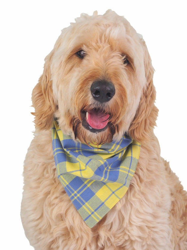 High quality dog bandana in blue and yellow plaid