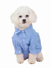 Taking your dog to work business shirt