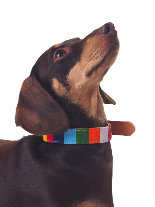 Cute colourful Rainbow Dog Collar
