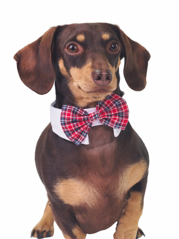Cute red plaid dog tuxedo bow tie collar
