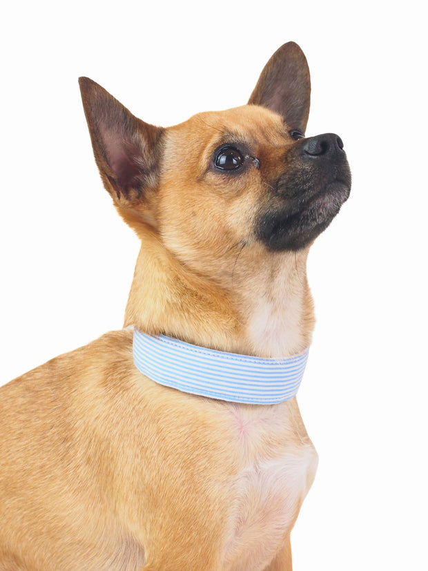 Fancy Blue Stripe Dog Collar