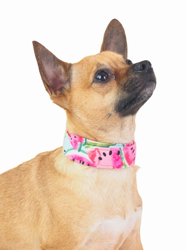 Fancy Juicy Watermelon Dog Collar