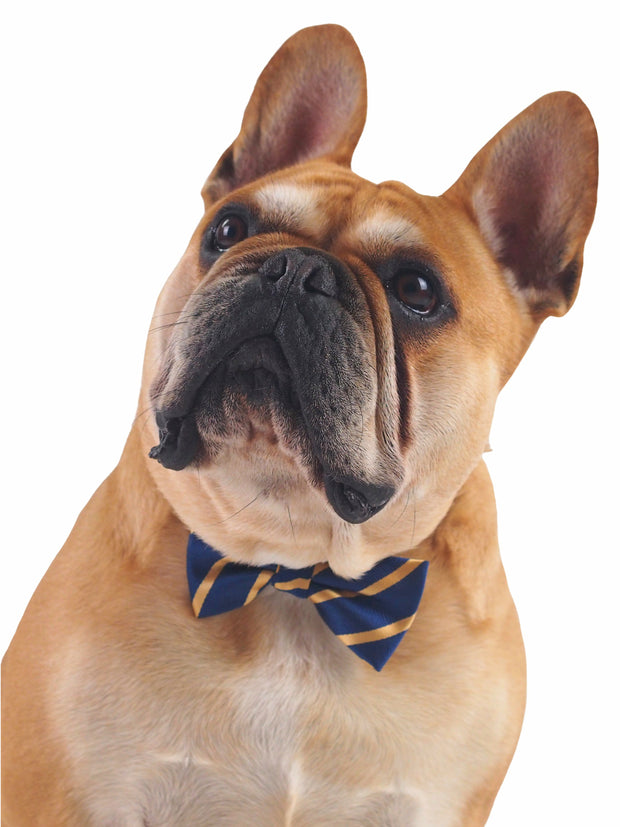 Affordable online dog bow tie