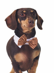 Yellow and grey plaid dog bow tie collar