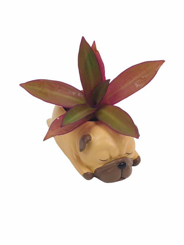 Cool dog lovers gifts pug succulent pot