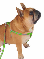 High visibility reflective dog harness and lead set