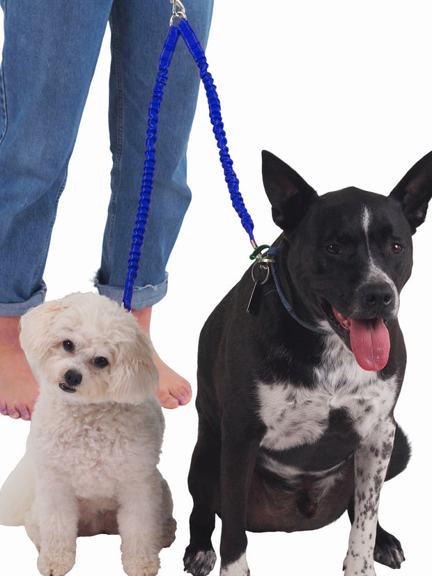 Elastic dog lead for walking two dogs at once