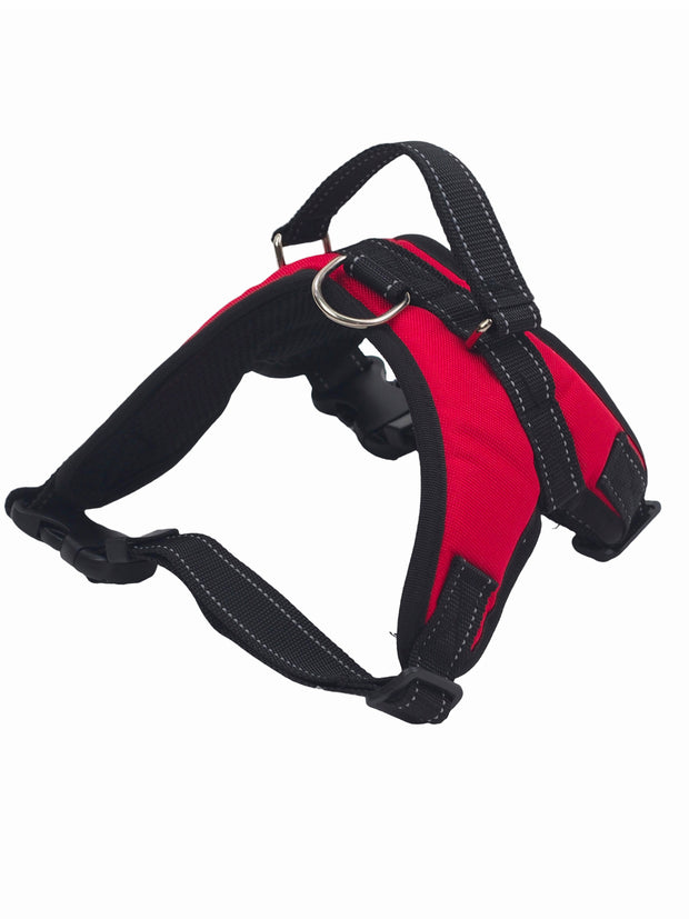 Affordable online dog muzzles and cotton harnesses