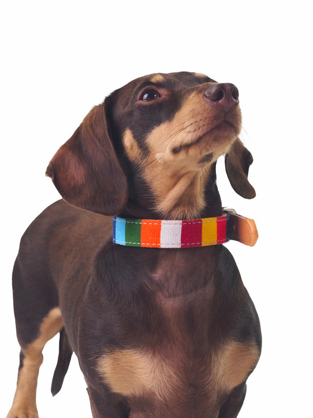 Fancy rainbow dog collar