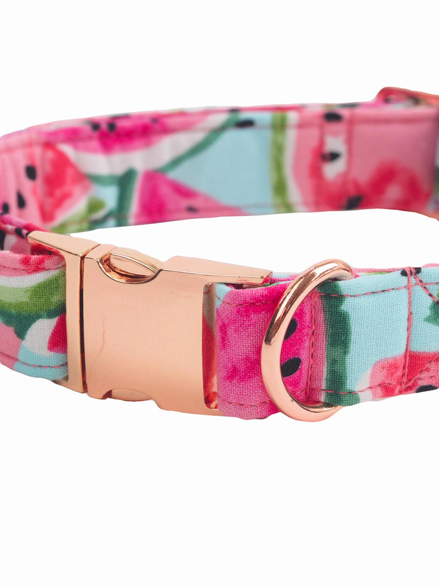 Affordable online watermelon dog collar