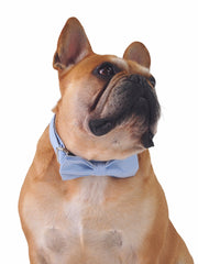 Blue and white striped bow tie and collar for dogs