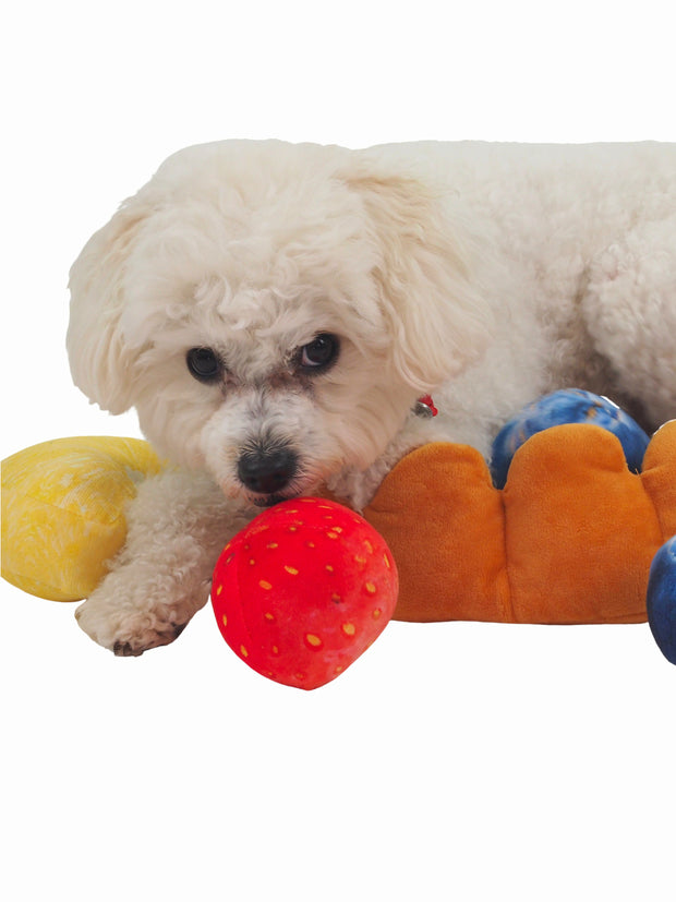 Trending fruit tart dog bed