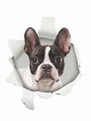 Funny 3D wall smash Boston terrier sticker