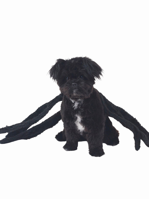 Gangly Spider Halloween Dog Costume