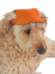 Cute hat for dogs in orange with chin strap