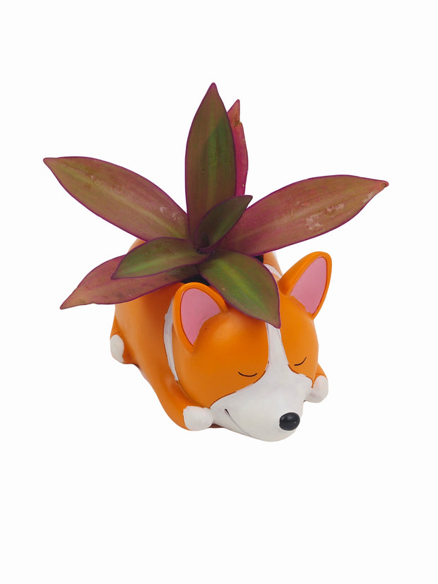 Sleepy Dog Corgi Succulent Planter