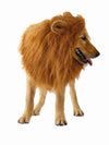 Lion mane with ears costume for dogs