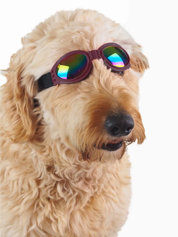 Adjustable shatterproof protective dog goggles